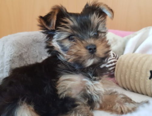 Unser neues Familienmitglied Nelly :-)