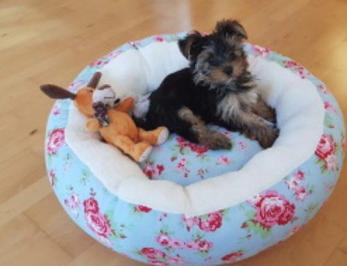 Hundekörbchen für Nelly