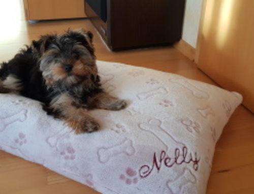 Kuschelkissen für Nelly