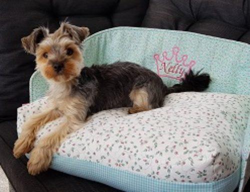 Eine Couch nur für Nelly :-)